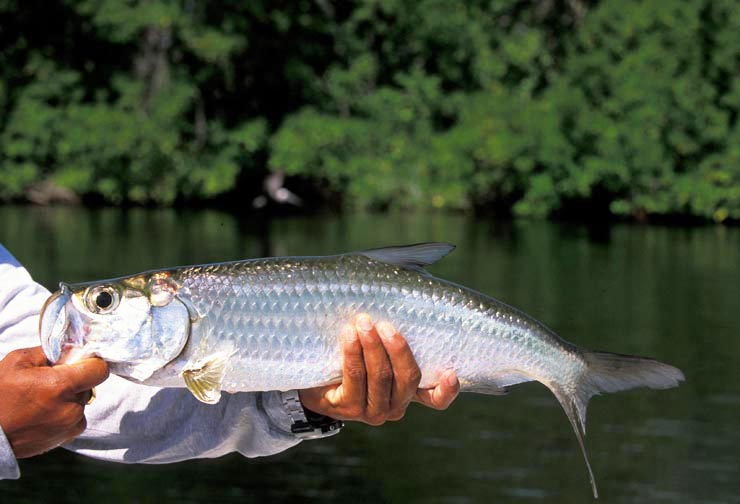 Photo BocaPaila_Fishing_003