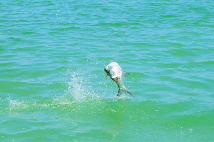 Photo BocaPaila_Fishing_011