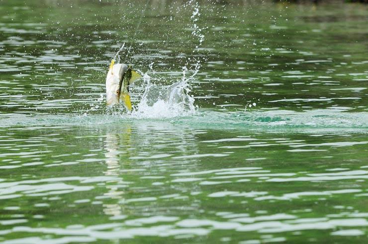 Photo BocaPaila_Fishing_016