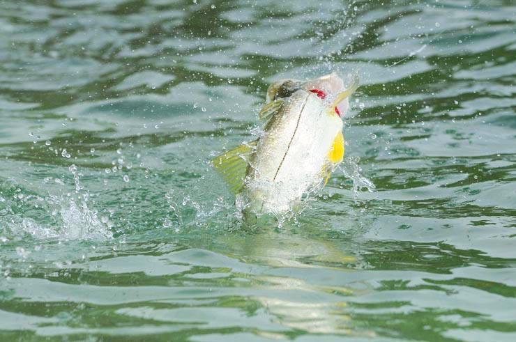 Photo BocaPaila_Fishing_017