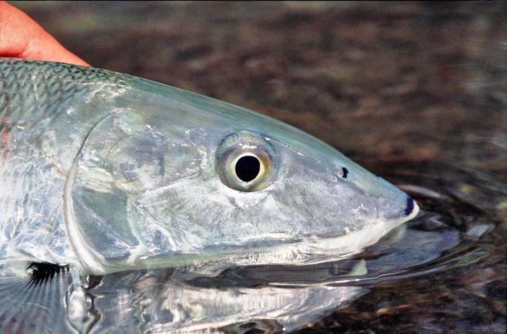 Photo BocaPaila_Fishing_037