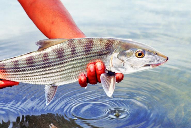 Photo BocaPaila_Fishing_039